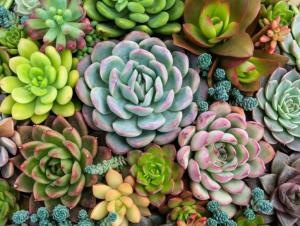 Come trattare le piante grasse?
